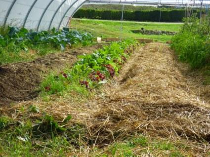La huerta tiene 3 grandes invernaderos que facilitan el cultivo en invierno