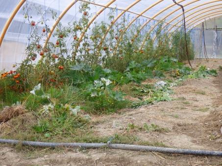Plantación de tomates